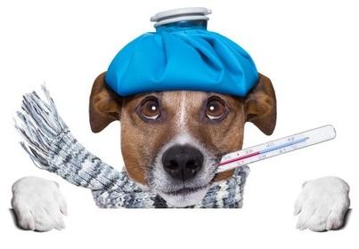 vzeiller aux soins de votre animal