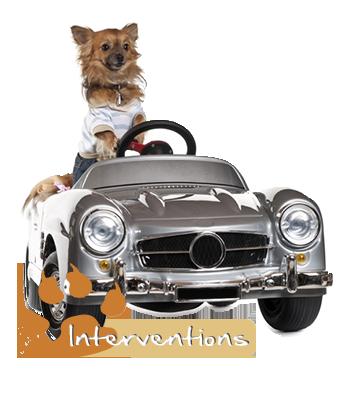 un chien conduit une voiture