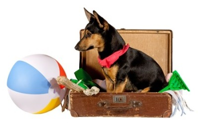 chien dans une valise avec jouets de plage