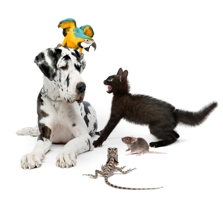 Qui va garder mon Boa constrictor et mon tigre du Bengale ?