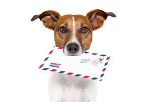chien porte une enveloppe dans la gueule