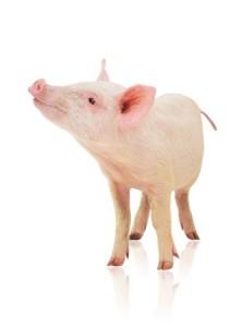 qui peut garder mon cochon rose