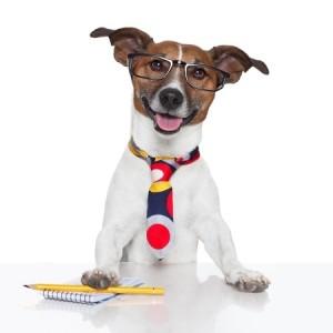 jack russel deguise en chien d'affaires