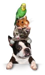 bouldog, chat, hamster et peroquet