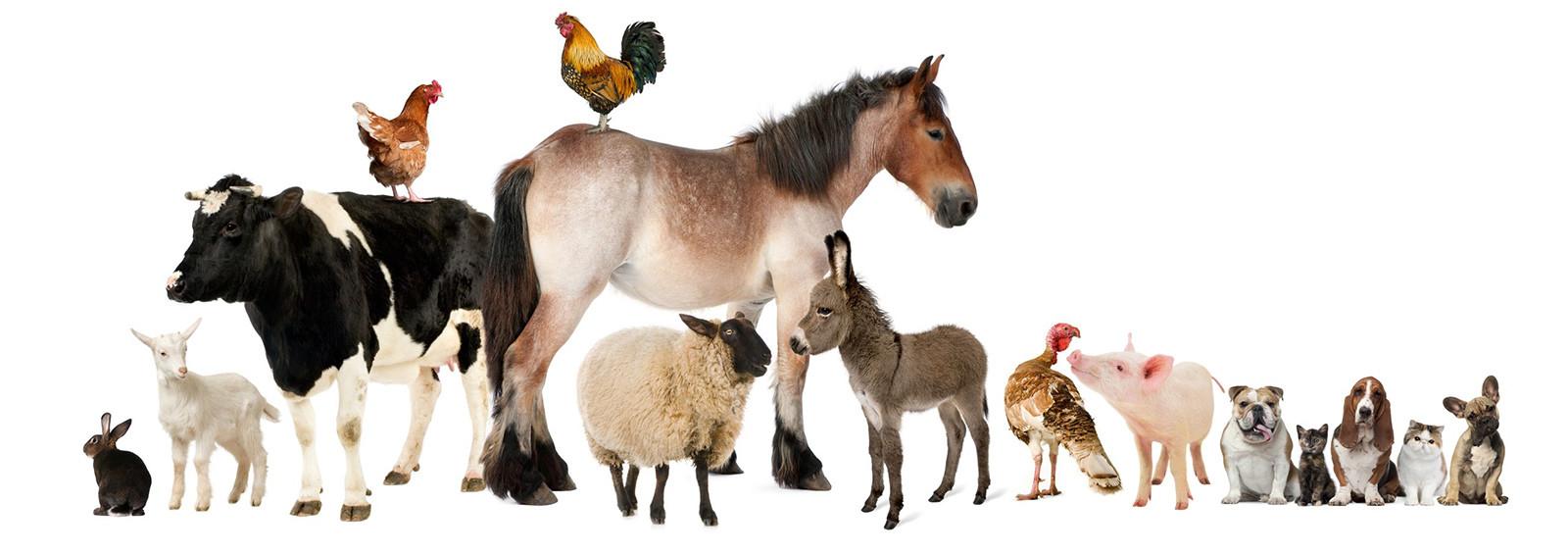 Animal'sgard garde tous les animaux à domicile, animaux de la ferme, basse cours, chevaux, animaux domestiques, nouveaux animaux de compagnie, NACS
